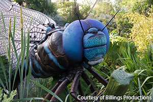 Blue-eyed Dragon Fly