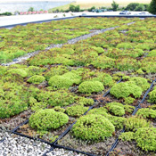 Picture of the Green Roof