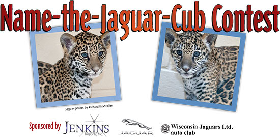 Name-the-Jaguar Cub Contest