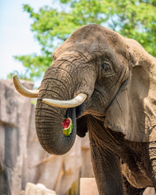 69fe69d24478 World Elephant Day at the Zoo