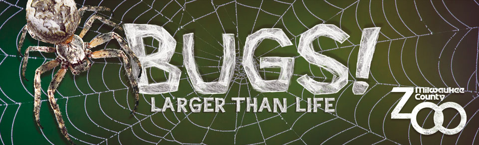 BUGS! Larger than Life, sponsored by Sendik's Food Markets - Click to return home