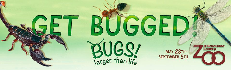 Get Bugged! - BUGS! Larger than Life, sponsored by Sendik's Food Markets - Click to return home