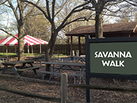 Savanna Walk
